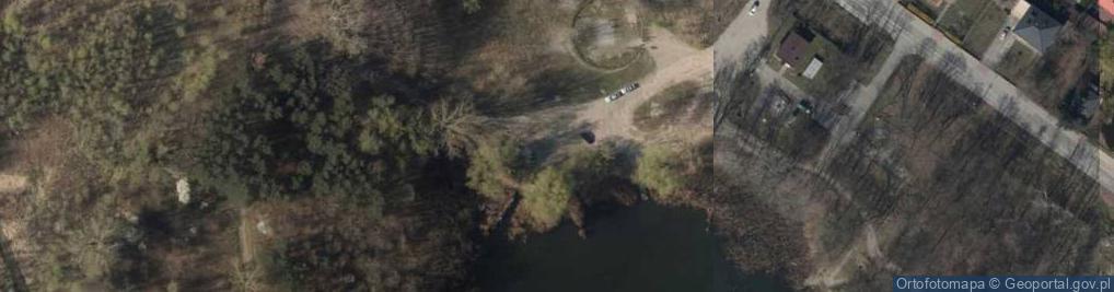 Zdjęcie satelitarne Salix alba foliage