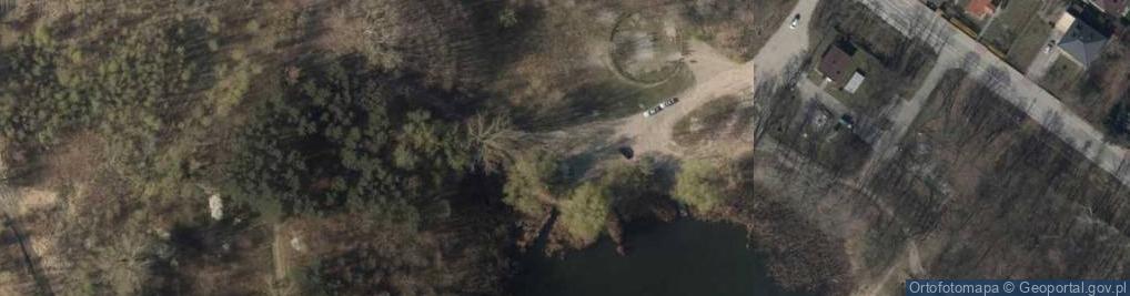 Zdjęcie satelitarne Salix alba Marki 2