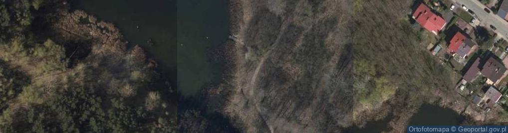 Zdjęcie satelitarne Salix alba Marki