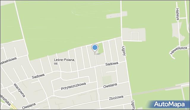 Toruń, Morelowa, mapa Torunia