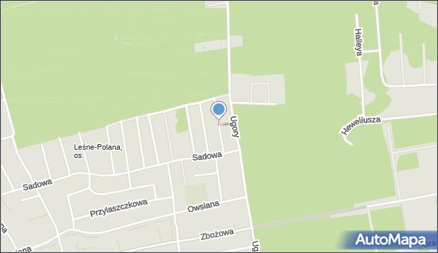 Toruń, Winogronowa, mapa Torunia