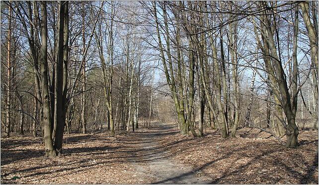 Tilia Marki 2, Grunwaldzka, Marki 05-270 - Zdjęcia